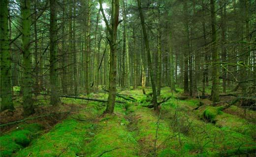 Boskaart zkt. duurzame bossen