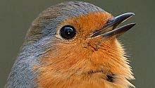 Een vogelvriendelijke tuin
