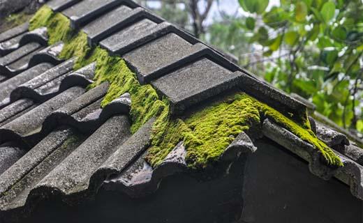 Kijk jij deze zomer uit op een proper dak?
