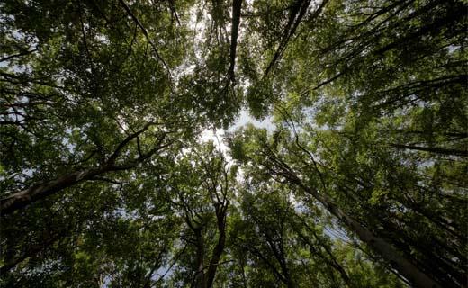 Consumenten letten op labels voor duurzaam bosbeheer