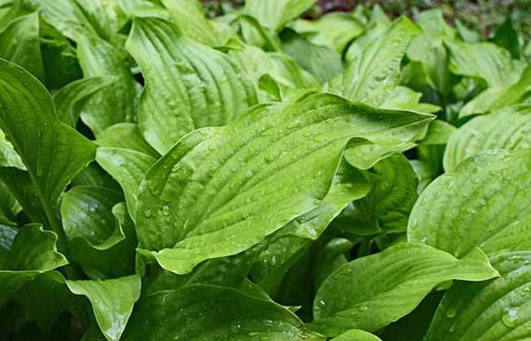 6 Redenen voor meer groen in jouw tuin