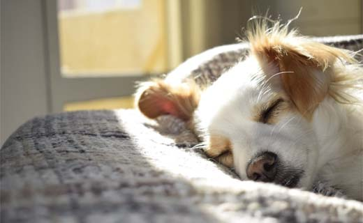 Hondje verhuizen (ook handig bij andere huisdieren)