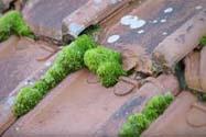 Poreuze daken door vegetatie