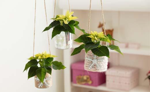 Mini-planten zijn de stralende sterren in november