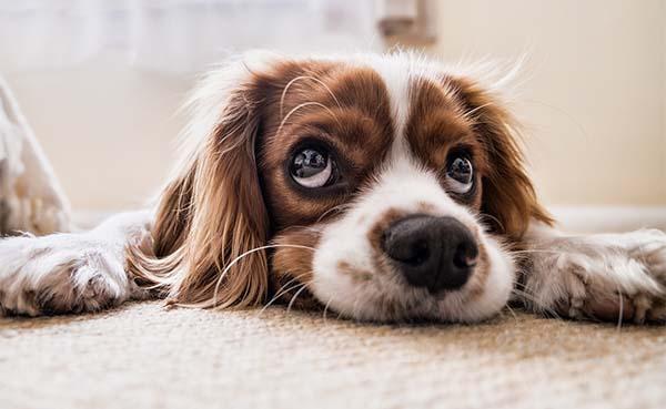 Wordt de schade door je huisdier vergoed door je woonverzekering?