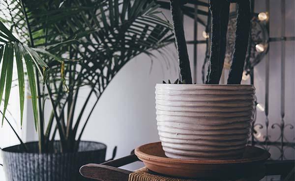 Het luchtzuiverend effect van planten