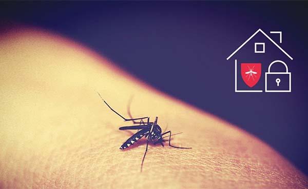 Jouw Loxone Smart Home, beschermer in nood tegen insecten