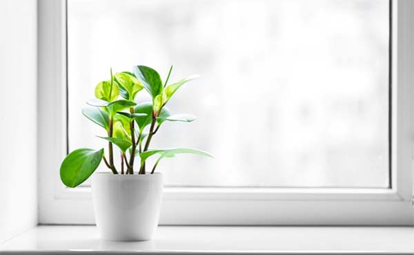 Nieuwe-ramen-en-deuren-ga-voor-duurzaamheid