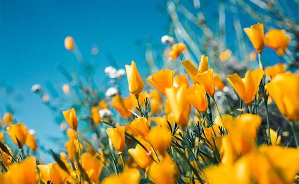 Tuin 2.0: Haal al het mogelijke uit jouw persoonlijke paradijs!