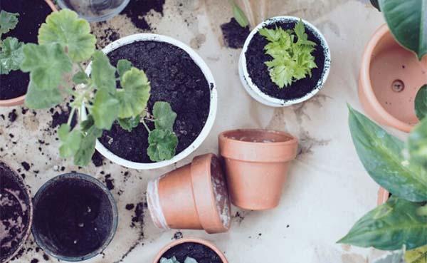 Paasvakantie in je tuin: 5 tips voor mooie bloemen en lekker fruit uit eigen hof