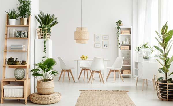 De voordelen van kamerplanten in je interieur
