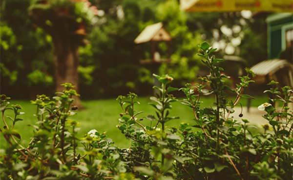Hoe kies je voor een makkelijk te onderhouden tuin?