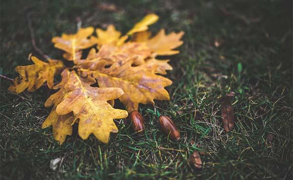 Tuintips voor de derde week van oktober
