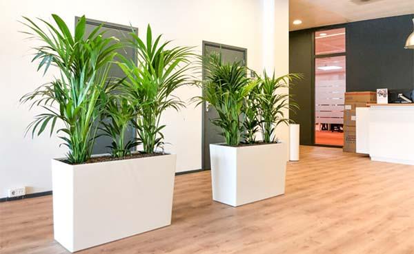 Luchtzuiverende plantenbak creëert veilig binnenklimaat op school en kantoor