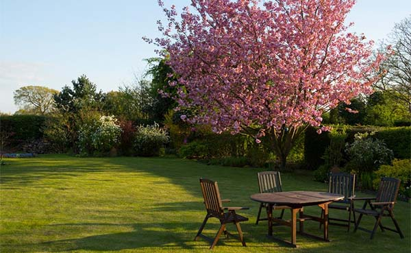 Tips waar je op moet letten bij het online kopen van bomen