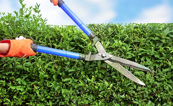 Tips voor het inrichten van je tuin