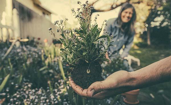 5 tips om jouw tuin door de warme zomermaanden te helpen