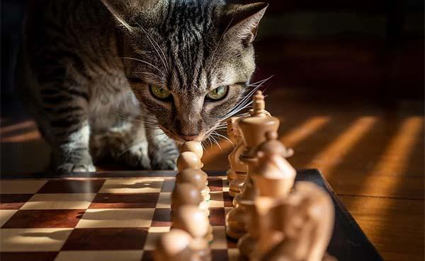 Topideeen-om-thuis-plezier-te-hebben-met-vrienden-(biljart-pokertafel-schaken)