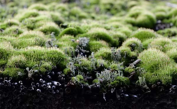 Groene tuinen en daken