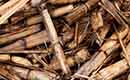 Strengere duurzaamheidscriteria voor biomassacentrales