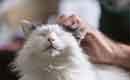 Kan een huurcontract huisdieren verbieden?
