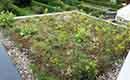 Stedelijke en groene woning wint Ecobouwers Renovatie van het Jaar