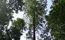 Boscertificaat biedt mogelijkheden voor private bosbeheerders