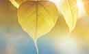 Tuintips voor de derde week van november