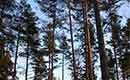 Duurzaam hout van het bos tot het dakvenster