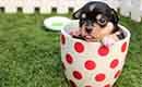 Maak uw huis en tuin diervriendelijk
