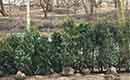 Groenblijvende haagplanten voor meer privé in je tuin in de zomer en winter