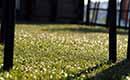 Kunstgras voor een onderhoudsvrije tuin