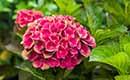 Nieuwe kleuren in de tuin met Magical hortensia's