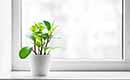 Nieuwe ramen en deuren; ga voor duurzaamheid!
