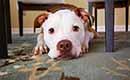 Schadekosten huisdieren: wanneer het dierenfeest een beestenboel wordt